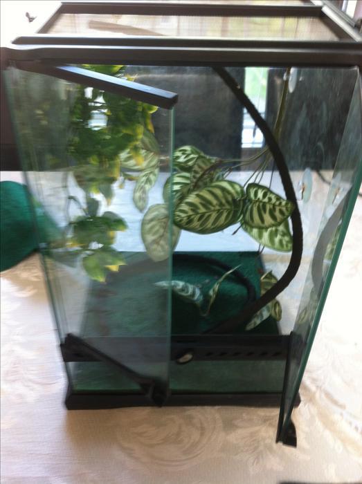 Reptile Terrarium Accessories Central Nanaimo Nanaimo