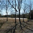 Great Building Lot- Close to Kemptville&Merrickvillle