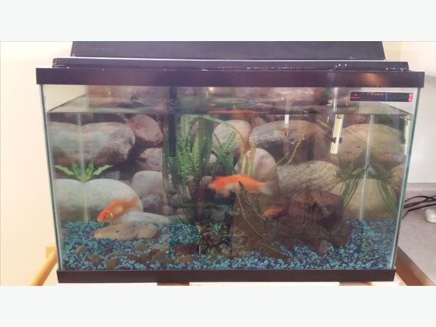30 Gallon Aquarium With Fish Maple Bay Cowichan Mobile