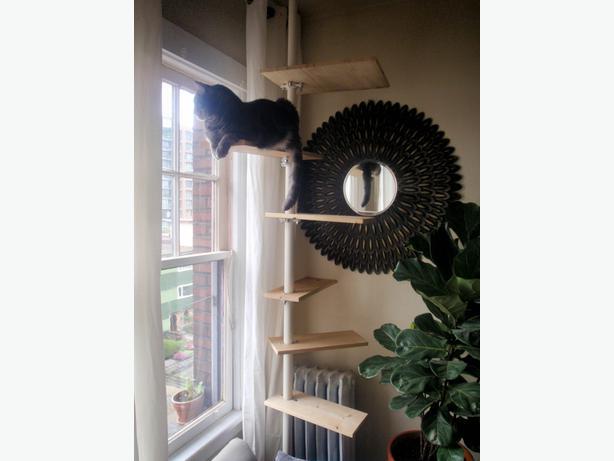 cat tree saanich victoria. Black Bedroom Furniture Sets. Home Design Ideas