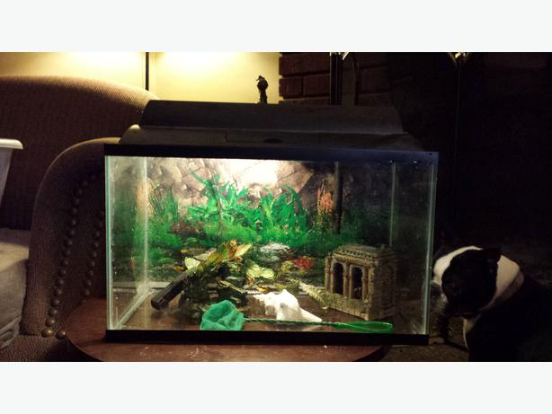 10 gallon fish tank for sale outside sault ste marie for 10 gallon fish tank heater
