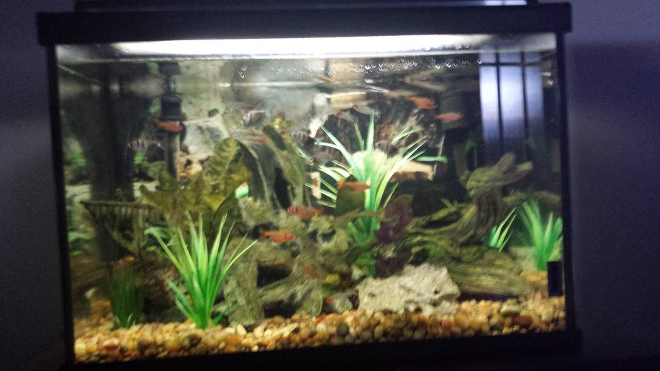 Price Reduced Beautiful 20 Gallon Aquarium And Fish West