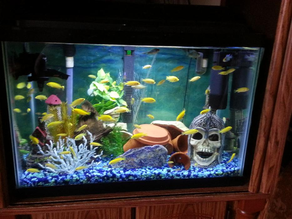 20 gallon fish tank filter system 20 gallon tall for 20 gallon saltwater fish tank