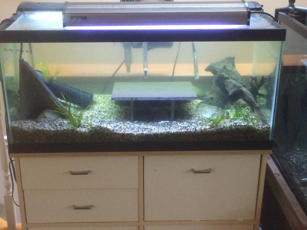 40 gal aquarium with great looking stand lots of for 40 gallon fish tank stand
