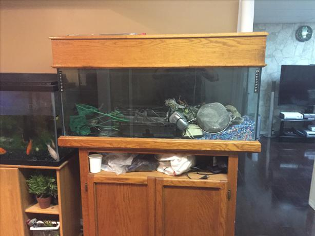 Two 55 gallon fish tank with stands each 200 east regina for 55 gal fish tank stand