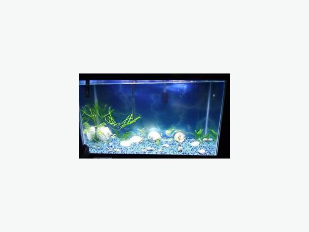 30 Gal Aquarium Package Tank Hood Light Heater Filter