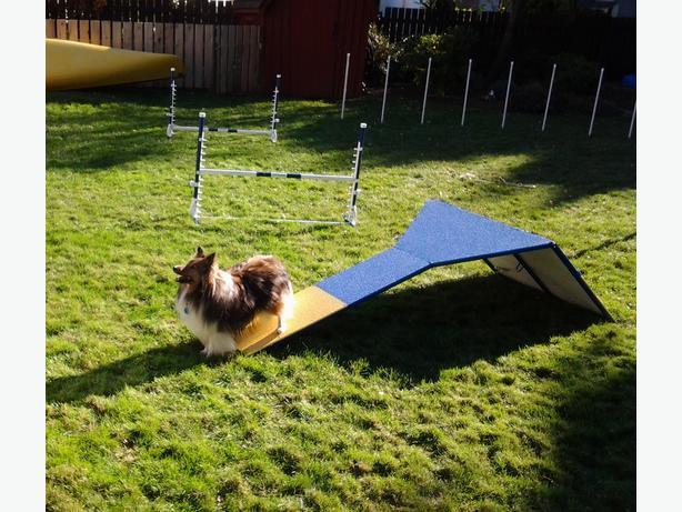 Dog Trainer Parksville