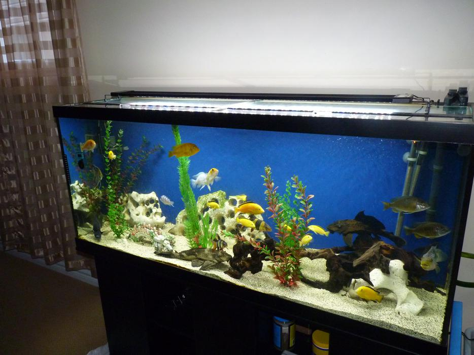 Used Aquariums Kitchener