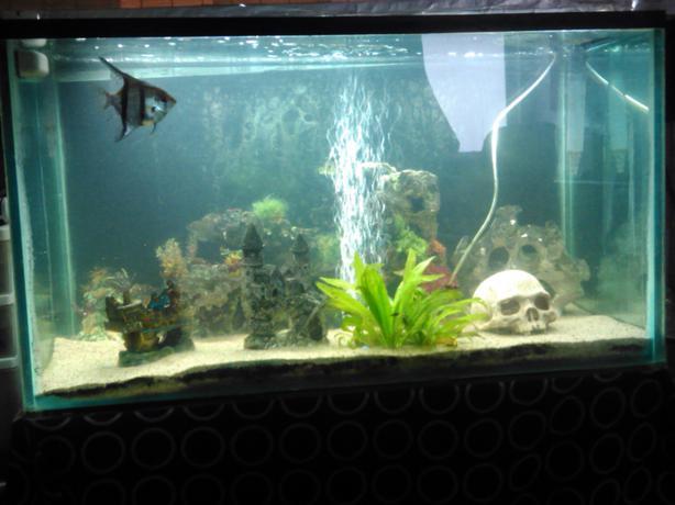 60 gallon fish tank central regina regina for 60 gallon fish tank