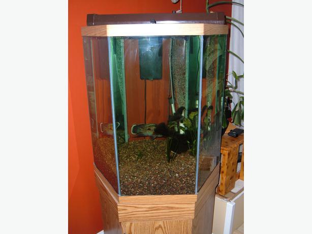 60 gallon octagon fish tank north regina regina for 60 gallon fish tank