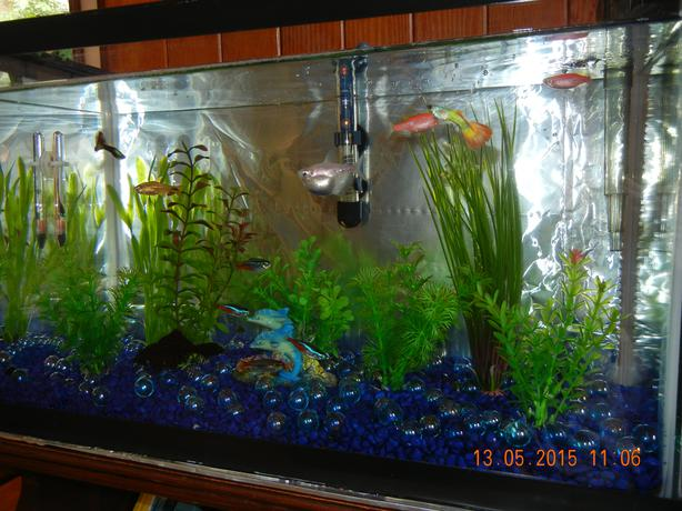 10 gallon tank fresh water fish and all accessories port for 10 gallon fish tank heater