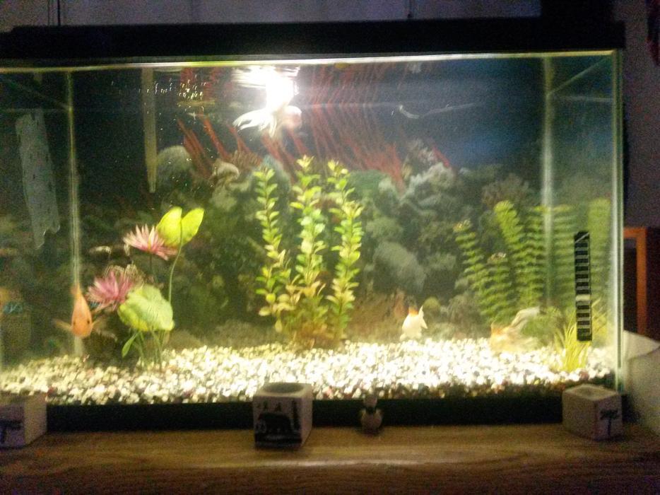 33 gallon fish tank outside nanaimo parksville qualicum beach for Fish tank gallon calculator