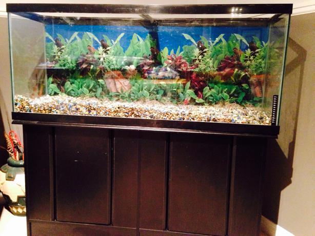 55 Gal Aquarium Stand