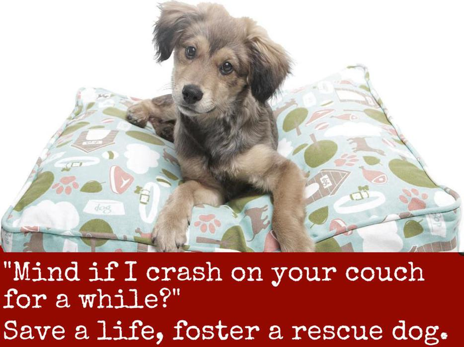 Sault Ste Marie Dog Rescue