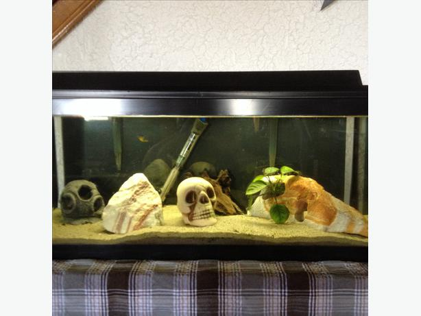 20 gallon long dwarf puffer aquarium fish tank outside for 20 gallon long fish tank