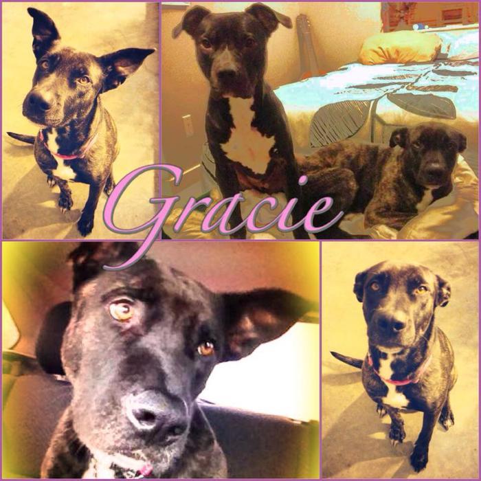 Fredericton Dog Rescue