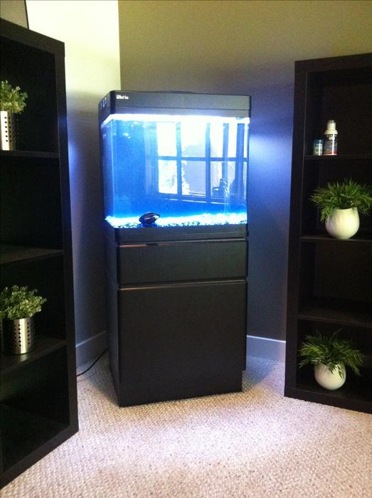 34 gallon red sea max fish tank for sale west shore for Used fish tanks for sale
