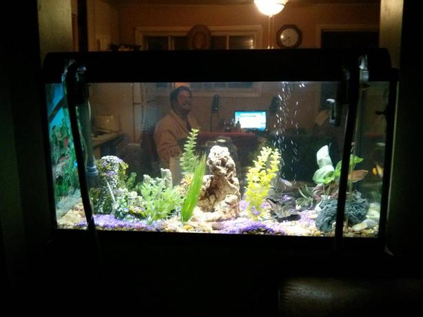 55 gl aquarium with stand and all accessories and 18 fish for Aquariums for sale near me