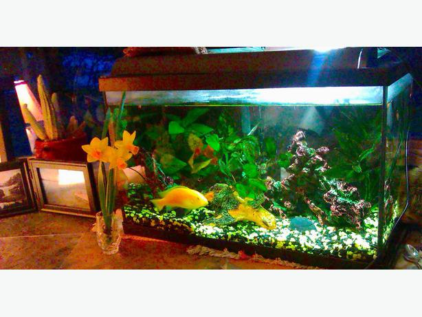 10 gallon fish tank 5 gallon filter aerator north for What do i need for a fish tank