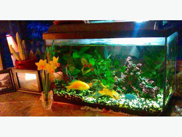 Petsmart fish pond filters petsmart free engine image for National geographic fish tank filter
