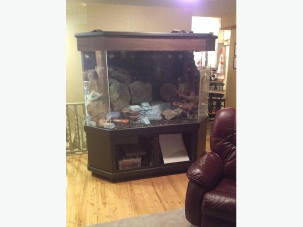 500 gallon 3 4 acrylic fish tank victoria city victoria for 4 gallon fish tank