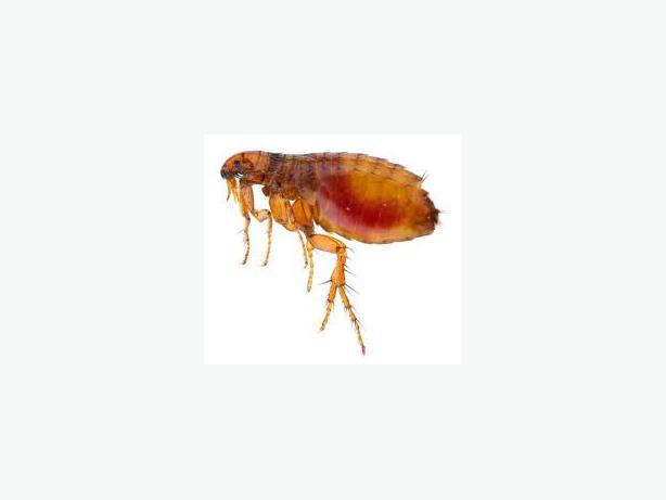 Bed Bug Busters Halifax