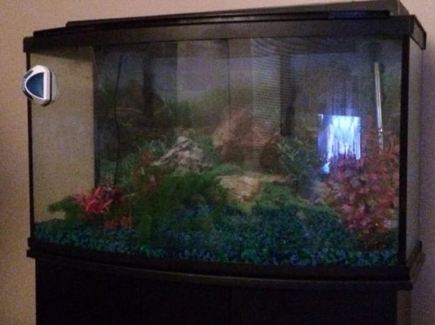 45 gallon fluval aquarium central regina regina for Used 300 gallon fish tank for sale