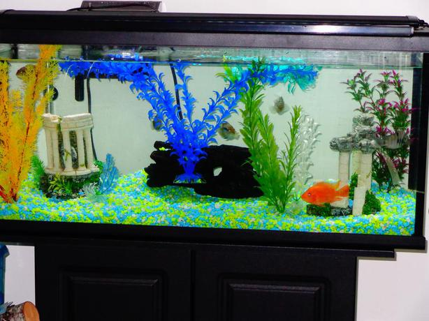 Fish tank stand one fish west shore langford colwood for Amazon fish tanks for sale