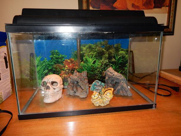10 gallon fish tank victoria city victoria for 55 gallon fish tank lid