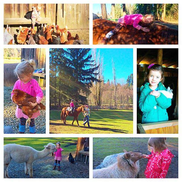 Barnyard Tours And Horseback Rides Campbell River Courtenay Comox
