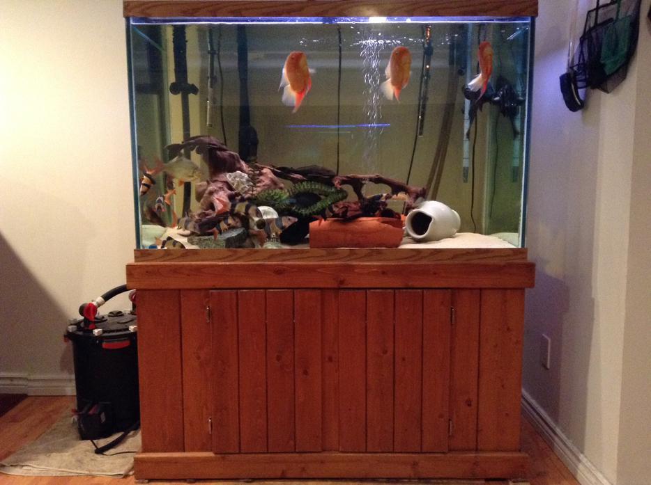 150 Gallon Tall Aquarium And Fish Tank Supplies Esquimalt View Royal Victoria