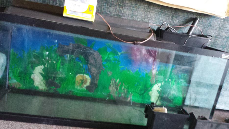 Still for sale fish tank filter and stand central regina for Used fish tanks for sale many sizes