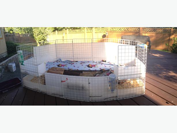 awesome custom guinea pig cage with extras saanich victoria