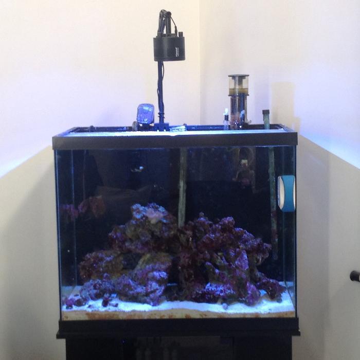 Complete set up 55 gallon saltwater tank esquimalt for 55 gallon fish tank setup