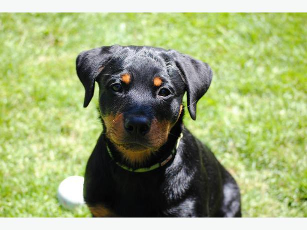 how to run a puppy class