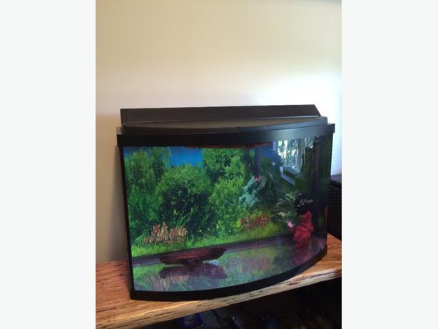 35 gallon bow front saanich victoria for 35 gallon fish tank
