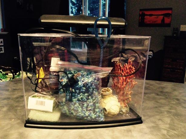 Fish tank west shore langford colwood metchosin highlands for Fish tank rock cleaner