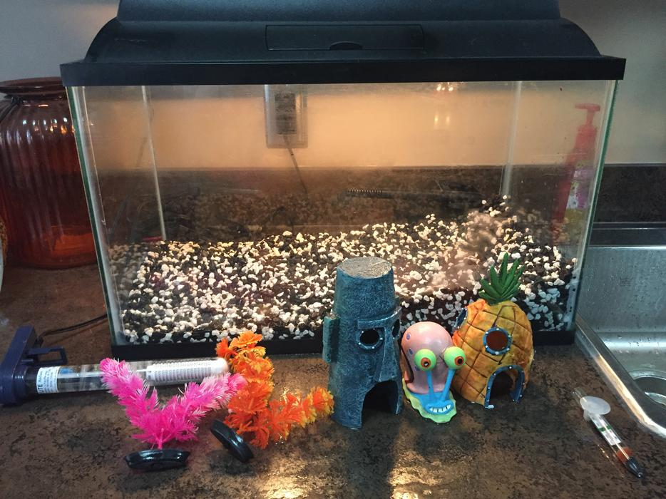 Fish tank with all accessories north regina regina mobile for How to make tap water safe for fish without conditioner
