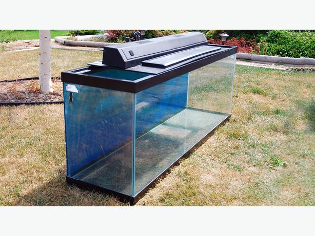 Fish tanks 55 10 gallon gravel heaters pump moon for How much is a fish tank