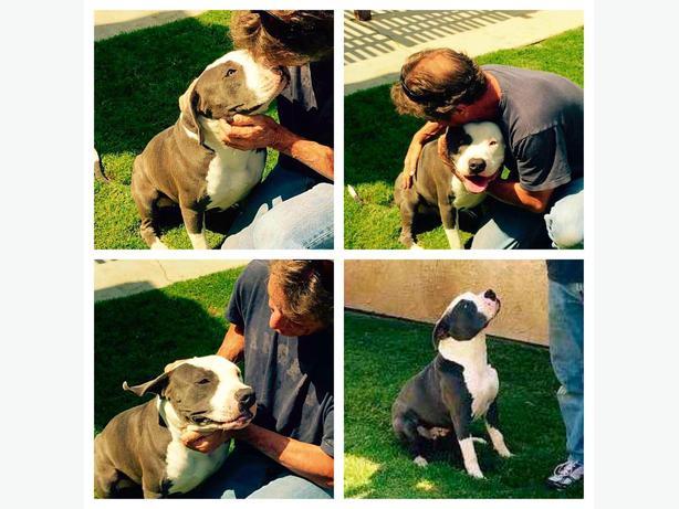 Adoptable Dogs Moncton