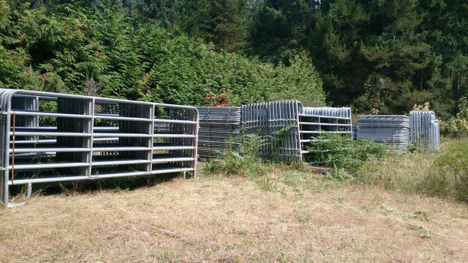 Horse For Sale Vancouver Island Bc