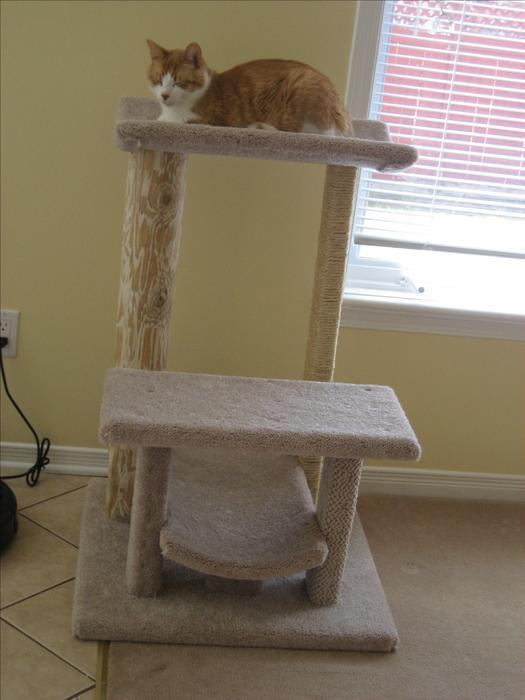 Salmon On Sale >> New Multi-surface cat tree for sale! Gloucester, Ottawa