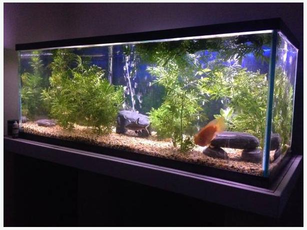 67 gallon fish tank and set up central nanaimo parksville for 200 gallon fish tank