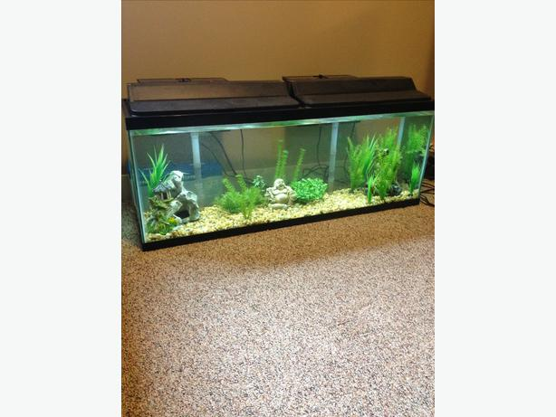 200 obo 55 gallon fish tank with all accessories duncan for 55 gallon aquarium decoration ideas