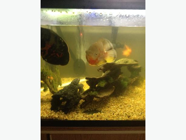 400 obo 110 gallon fish tank with all accessories outside for National geographic fish tank filter