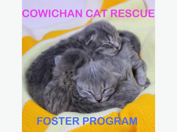 Kitten foster care for Cowichan Cat Rescue