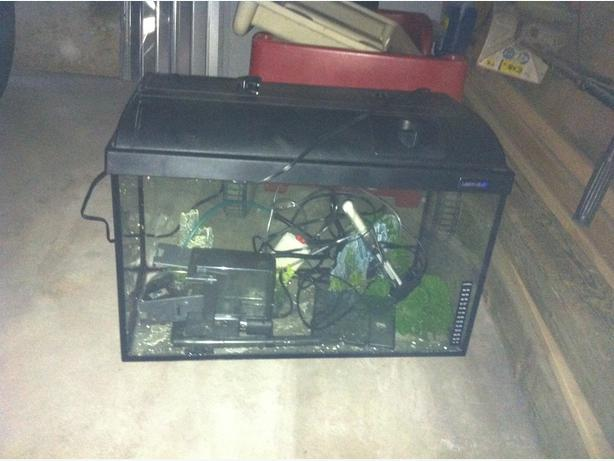 20 gallon fish tank and accessories for sale north east for 20 gallon fish tank for sale