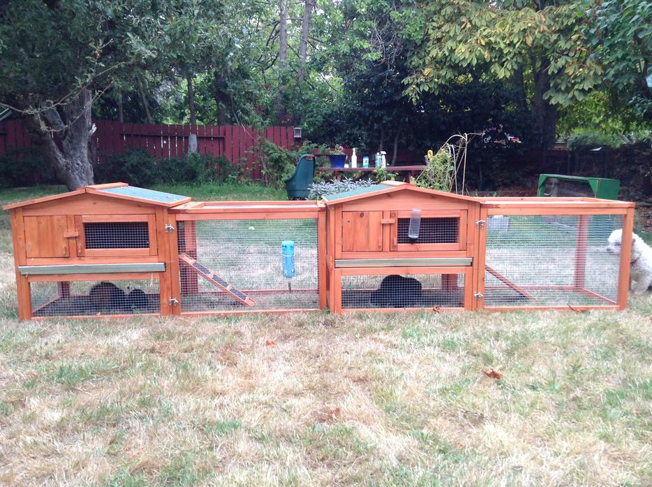 Outdoor guinea pig hutch and run for daytime saanich victoria for Outdoor guinea pig hutch