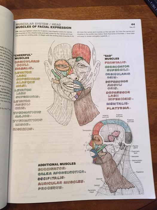 The Anatomy Coloring Book 4th Edition Paperback | Coloring Page
