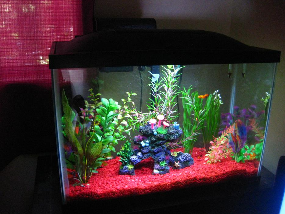 2 20 gallon aquariums 1 saltwater 1 fresh 110 obo maple for 20 gallon saltwater fish tank